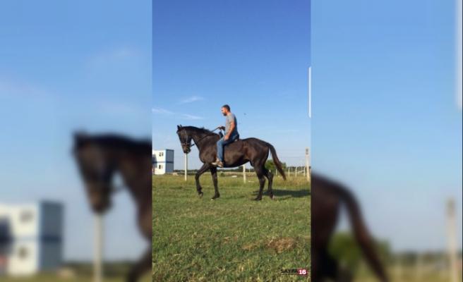 Kayıp yarış atı parçalanmış halde bulundu