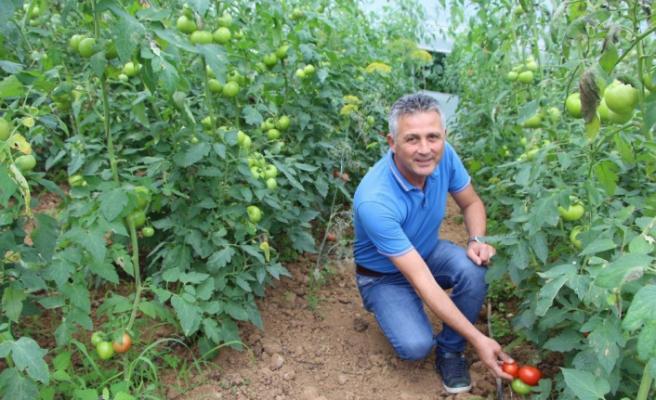 Dünyada sebzelere olan talep hızlı bir şekilde artıyor