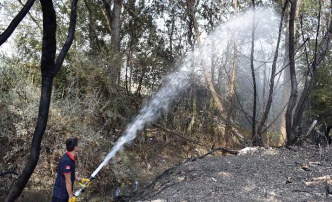 Odunlukta başlayan yangın 10 hektar alanı küle çevirdi