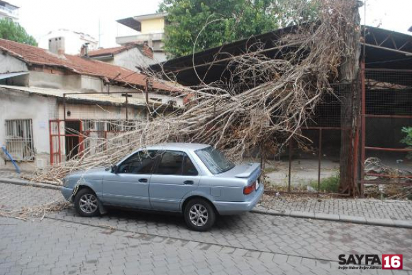 Otomobilin üzerine kavak ağacı devrildi