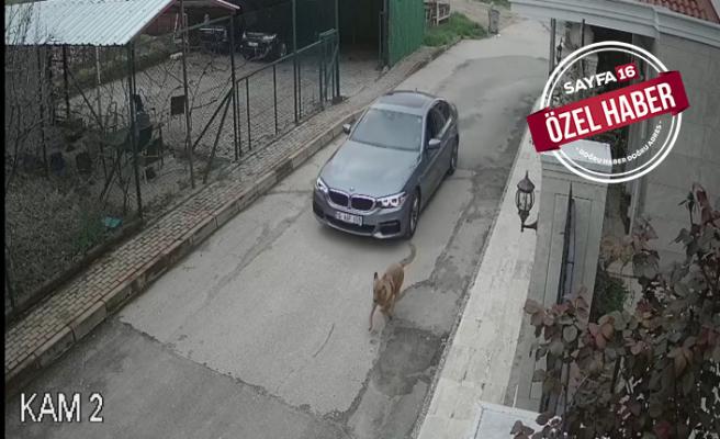 Köpek katliamına bahane hazırladı