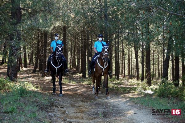 jandarma atlı birlikleri ormanda denetim yaptı