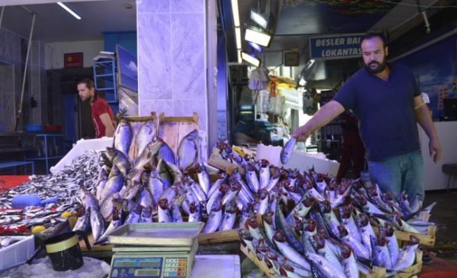Balık bollaşıyor fiyat düşüyor