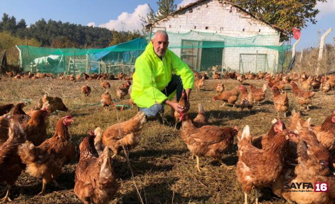 Pandemide gezen tavuk yumurtalarına ilgi büyük