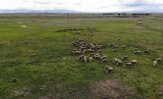 Köyün 3 bin hayvanı var, meraları ellerinden alındı
