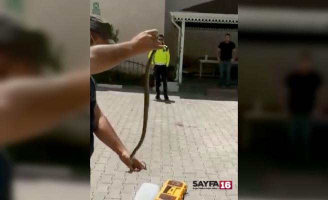 Otomobile giren yılanı elleriyle çıkardı
