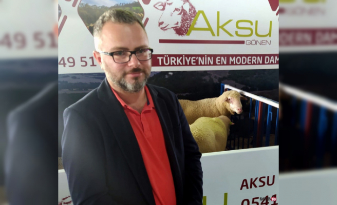 Türk Merinos koyununa yoğun ilgi