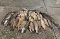 Yasak tanımayan avcılara ceza yağdı
