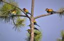 5 yılda 200'e yakın kuş türünü fotoğrafladı