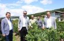 İznik'te yaban mersini festivali