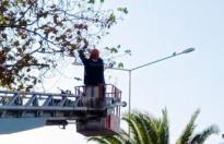 Ayağına misina dolanan güvercin asılı kaldığı ağaçtan kurtarıldı