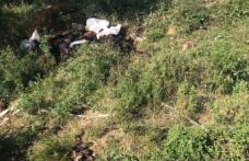 Bursa'da arazide binlerce ölü tavuk bulundu