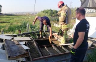 Su kuyusundan kurbanlık dana kurtarma operasyonu