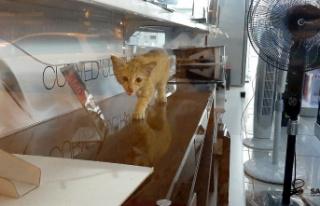 Yaramaz minik kedi iş yerinde mahsur kaldı