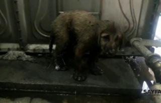 Zifte yapışarak mahsur kalan yavru köpekleri Mehmetçik...
