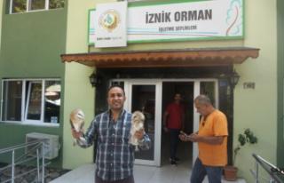 Yaralı 2 peçeli baykuş tedaviye gönderildi