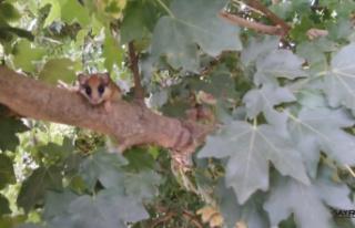 Nadir bulunan hayvanı bulup Bursa'da yaşadığını...