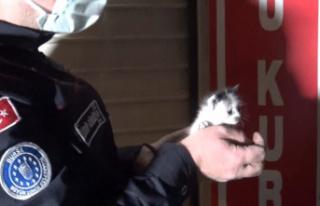 Bursa'da yavru kedileri kurtarmak için seferber...
