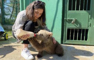 Ünlü oyuncu Bursa'da: Yavru ayıyı biberonla...