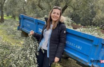 Ünlü oyuncu Bursa'da zeytin dalı topladı