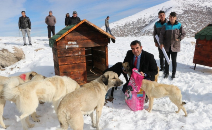 """Dağa oyuk açan Belediye Başkanı, """"Köpek Köyü"""" kurdu"""