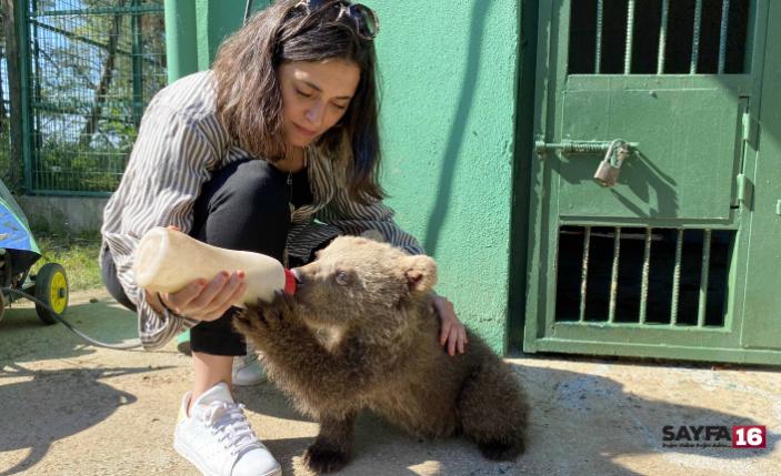 Ünlü oyuncu Bursa'da: Yavru ayıyı biberonla besledi